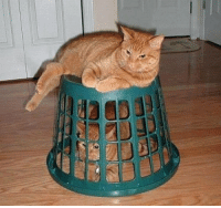 "Tumblr, Prison, and Blog: <p><a href=""http://srsfunny.net/post/171109890214/stanford-prison-experiment"" class=""tumblr_blog"">srsfunny</a>:</p><blockquote><p>Stanford Prison Experiment</p></blockquote>"