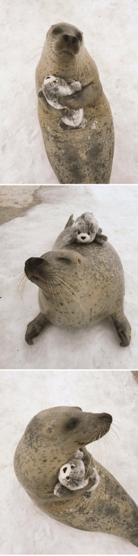 """<p><a href=""""http://tumblr.tastefullyoffensive.com/post/157840457373/aku-the-seal-from-mombetsu-land-in-hokkaido"""" class=""""tumblr_blog"""">tastefullyoffensive</a>:</p>  <blockquote><p>Aku, the seal, from<a href=""""http://mombetsu.info/"""">Mombetsu Land</a>in Hokkaido, Japan happily hugs a plushie toy version of himself. (photos via<a href=""""https://twitter.com/mombetsu_land/status/834633242619764736?ref_src=twsrc%5Etfw"""">Twitter</a>)</p></blockquote>: <p><a href=""""http://tumblr.tastefullyoffensive.com/post/157840457373/aku-the-seal-from-mombetsu-land-in-hokkaido"""" class=""""tumblr_blog"""">tastefullyoffensive</a>:</p>  <blockquote><p>Aku, the seal, from<a href=""""http://mombetsu.info/"""">Mombetsu Land</a>in Hokkaido, Japan happily hugs a plushie toy version of himself. (photos via<a href=""""https://twitter.com/mombetsu_land/status/834633242619764736?ref_src=twsrc%5Etfw"""">Twitter</a>)</p></blockquote>"""