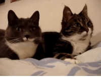 "Cats, Omg, and Target: <p><a href=""http://wizardshark.tumblr.com/post/167477687728/froze-theyre-talking-to-each-other-omg"" class=""tumblr_blog"" target=""_blank"">wizardshark</a>:</p> <blockquote> <p><a href=""https://froze.tumblr.com/post/167428262354/theyre-talking-to-each-other-omg"" class=""tumblr_blog"" target=""_blank"">froze</a>:</p> <blockquote><p>they're talking to each other omg (':</p></blockquote>  <p>This is my favorite video in all of world history I would die for these cats </p> </blockquote>"