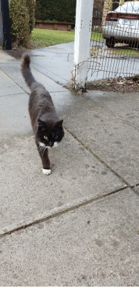 "<p><a href=""https://daily-blep.tumblr.com/post/176297079301/neighbourhood-cat-with-places-to-go-blep"" class=""tumblr_blog"">daily-blep</a>:</p>  <blockquote><p>Neighbourhood cat with places to go blep</p></blockquote>: <p><a href=""https://daily-blep.tumblr.com/post/176297079301/neighbourhood-cat-with-places-to-go-blep"" class=""tumblr_blog"">daily-blep</a>:</p>  <blockquote><p>Neighbourhood cat with places to go blep</p></blockquote>"