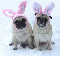 """Bunnies, Easter, and Omg: <p><a href=""""https://omg-images.tumblr.com/post/159532156142/our-easter-bunnies"""" class=""""tumblr_blog"""">omg-images</a>:</p>  <blockquote><p>Our Easter Bunnies</p></blockquote>"""