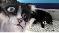 """Omg, Tumblr, and Blog: <p><a href=""""https://omg-images.tumblr.com/post/167128482892/catdad-is-back"""" class=""""tumblr_blog"""">omg-images</a>:</p>  <blockquote><p>CatDad Is Back!</p></blockquote>"""