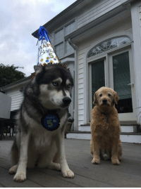 """Birthday, Omg, and Tumblr: <p><a href=""""https://omg-images.tumblr.com/post/167664052322/our-young-lady-with-her-birthday-hat-on-and-older"""" class=""""tumblr_blog"""">omg-images</a>:</p>  <blockquote><p>Our young lady with her birthday hat on and older brother in the back</p></blockquote>"""