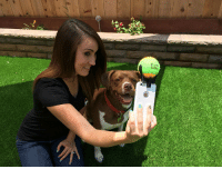 "Dog, Smartphone, and For: <p><b><a href=""https://amzn.to/2Lofo5D"">This smartphone accessory </a></b> makes your dog pose for selfies</p>"