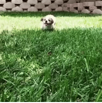 Slow Motion, Running, and Dog: <p>a dog running in slow motion<br/></p>