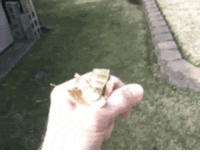 <p>Clever Hummingbird Gets Its Prize By Becoming A Mini Leaf Blower.</p>: <p>Clever Hummingbird Gets Its Prize By Becoming A Mini Leaf Blower.</p>