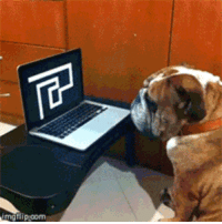 <p>Dog is not amused by human prank</p>: <p>Dog is not amused by human prank</p>