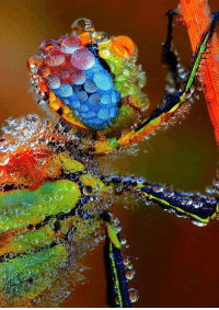 <p>Dragonfly Coated In Morning Dew.</p>: <p>Dragonfly Coated In Morning Dew.</p>