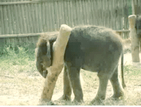 "Elephant, Http, and Post: <p>Elephant Calf vs The Post <a href=""http://bit.ly/1e9sHkj"">http://bit.ly/1e9sHkj</a></p>"