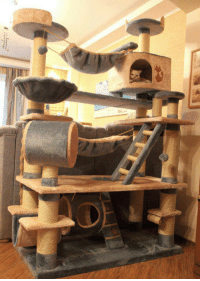 Tree, Epic, and Cat: <p>Epic Cat Tree, Probably The Mansion Version.</p>