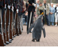 "Http, Via, and Sir: <p>Famous knight, Sir Nils Olav, inspects the Royal Guard via /r/wholesomememes <a href=""http://ift.tt/2x9VarE"">http://ift.tt/2x9VarE</a></p>"