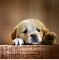 <p>Hello , here is a picture of a cute puppy to brighten up your day!</p>: <p>Hello , here is a picture of a cute puppy to brighten up your day!</p>