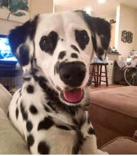 <p>Hi can I have your attention:<br/>This dog has heart eyes.<br/>Thank you</p>: <p>Hi can I have your attention:<br/>This dog has heart eyes.<br/>Thank you</p>