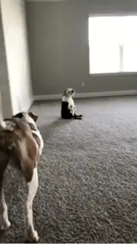 <p>his owner started playing music so he started dancing<br/></p>: <p>his owner started playing music so he started dancing<br/></p>