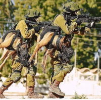 """<p>Holstered Attack Dog.<br/><a href=""""http://daily-meme.tumblr.com""""><span style=""""color: #0000cd;""""><a href=""""http://daily-meme.tumblr.com/"""">http://daily-meme.tumblr.com/</a></span></a></p>: <p>Holstered Attack Dog.<br/><a href=""""http://daily-meme.tumblr.com""""><span style=""""color: #0000cd;""""><a href=""""http://daily-meme.tumblr.com/"""">http://daily-meme.tumblr.com/</a></span></a></p>"""