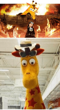 Head, Omg, and Shit: <p>I am absolutely terrified of this Toys R Us giraffe nibba. Omg, I have a burning hatred for that frickin&rsquo; giraffe. He seemed like 30 ft tall to me. Y'all know how the ceilings were like a warehouse, so to my 5 yr old self, I thought that the head was like banging against the bars up there. Thats how I remembered that thing. This shit would make me break into a cold sweat and shit my pants. I would become hysterical and Usain Bolt out of there. The fear is branded so deep into my childhood core. I must avenge myself and every child on this planet. Bc this is&hellip; Attack on Geoffrey.</p>