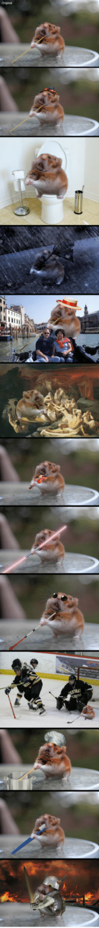 <p>Just A Day In The Life Of Spaghetti Hamster.</p>: <p>Just A Day In The Life Of Spaghetti Hamster.</p>