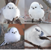 <p>Look how cute this bird is<br/></p>: <p>Look how cute this bird is<br/></p>