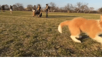 "Slow Motion, Target, and Twitter: <p>Puppers running in slow motion<br/></p><p>(via <a href=""https://twitter.com/zilkerbark/status/710257212900311040"" target=""_blank"">@zilkerbark</a>)</p>"
