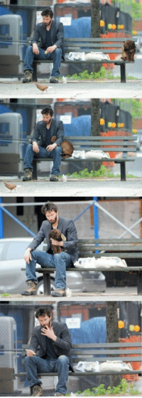 """Puppies, Tumblr, and Affect: <p>Puppies don&rsquo;t affect Keanu&rsquo;s sadness, or hunger.</p> <p>Submitted by mk &amp; <a href=""""http://gizzard.tumblr.com/"""">gizzard</a></p>"""