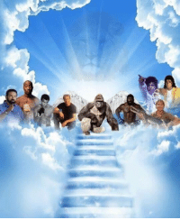 Meme, Fallen, and Rip: <p>RIP to all of our fallen meme lords</p>