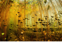 Forest and  Tadpole: <p>Tadpole forest.</p>