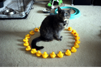 <p>The ritual is complete.</p>: <p>The ritual is complete.</p>