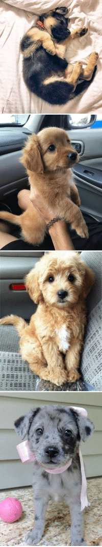 Day, Will, and Make: <p>These pups will surly make your day better<br/></p>