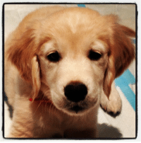 """Best Friend, Instagram, and Taken: <p>This is my new puppy. Her name is Gary. She&rsquo;s my new best friend. - Jimmy (Taken with <a href=""""http://instagram.com"""" target=""""_blank"""">Instagram</a>)</p>"""