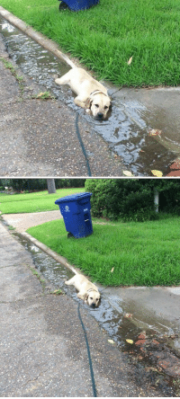 Mood, Today, and Sad: <p>today&rsquo;s mood: sad pupper lying down in a puddle<br/></p>
