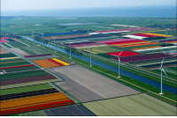Holland, Tulip, and Fields: <p>Tulip fields in Holland</p>