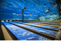 <p>Underwater Bowling Alley.</p>: <p>Underwater Bowling Alley.</p>