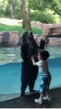 Bear, Wholesome, and Child: <p>Wholesome bear hopping with child</p>