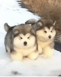 -> @fluffypiqasso follow for more cute animal content!!!! - CUTEST THING IVE SEEN ALL DAY 😭😍❤️ - Via: Imgur-boopmonger: -> @fluffypiqasso follow for more cute animal content!!!! - CUTEST THING IVE SEEN ALL DAY 😭😍❤️ - Via: Imgur-boopmonger