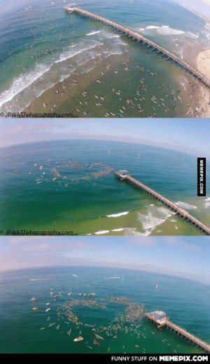 Yesterday, there was a paddle out for a lifeguard who died during a rescue. These are all the surfers who attended.omg-humor.tumblr.com: © JBWATTphotography.com  O JBWATTphotography.com  FUNNY STUFF ON MEMEPIX.COM  MEMEPIX.COM Yesterday, there was a paddle out for a lifeguard who died during a rescue. These are all the surfers who attended.omg-humor.tumblr.com