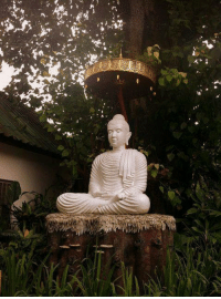 You only lose what you cling to.  ~ The Buddha ~: ˊ曳、戗  .齢簿惹  및 You only lose what you cling to.  ~ The Buddha ~