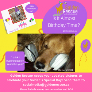 """Is your Golden's Birthday coming up? If it is, we at Golden Rescue would love to have a recent photo of your special family member. Please send photos to socialmedia@goldenrescue.ca  Please use """"Birthday Photo"""" as your subject line and be sure to include your dogs' name and rescue number in your email. Please send your photo to us at least one month in advance of your Golden's birthday. Thank you!  #goldenretriever #rescuedog #adoptdontshop #birthday: Наpрy  Birthday to  Rescue  Is It Almost  Golden  me!!  About Second Chances  Birthday Time?  goldenrescue.ca  Jack #1753  """"I think I  overindulged on  treats this year""""  Dexter #1801  Golden Rescue needs your updated pictures to  celebrate your Golden's Special Day! Send them to:  socialmedia@goldenrescue.ca  Please include name, rescue number and DOB Is your Golden's Birthday coming up? If it is, we at Golden Rescue would love to have a recent photo of your special family member. Please send photos to socialmedia@goldenrescue.ca  Please use """"Birthday Photo"""" as your subject line and be sure to include your dogs' name and rescue number in your email. Please send your photo to us at least one month in advance of your Golden's birthday. Thank you!  #goldenretriever #rescuedog #adoptdontshop #birthday"""