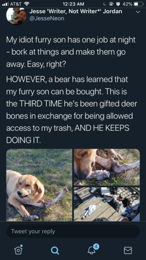 caucasianscriptures:Corrupt doggo bribed by bear: С @ О 42%-O,  12:23 AM  l AT&T  Jesse 'Writer, Not Writer*i Jordan  @JesseNeon  My idiot furry son has one job at night  - bork at things and make them go  away. Easy, right?  HOWEVER, a bear has learned that  my furry son can be bought. This is  the THIRD TIME he's been gifted deer  bones in exchange for being allowed  access to my trash, AND HE KEEPS  DOING IT  Tweet your reply  4 caucasianscriptures:Corrupt doggo bribed by bear