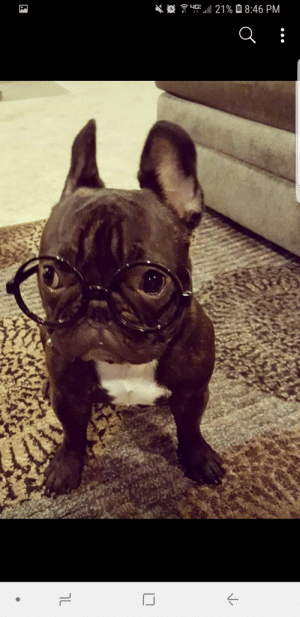 """Harry Potter, Potter, and Changeling: ןL  t  תי ן:8 1מ  Oא  א  """"ך Neville the Frenchie changeling his inner Harry Potter"""