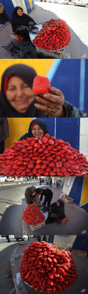 richardalperts:  lahciguapa:momo33me:An old woman sells strawberries in Gaza . 2 February 2015Those are the most beautiful strawberries I ever seen. I've reblogged them before, but I would be head over heels for a basket of strawberries like that.: এ) richardalperts:  lahciguapa:momo33me:An old woman sells strawberries in Gaza . 2 February 2015Those are the most beautiful strawberries I ever seen. I've reblogged them before, but I would be head over heels for a basket of strawberries like that.