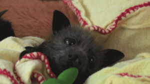 Tumblr, Blog, and Http: క daily-batty-dose:  Your Daily Batty Dose