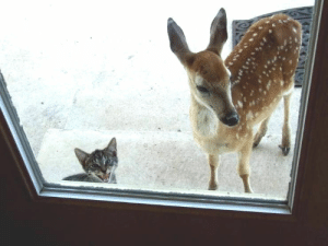 """Hey mom, can Bambi come over for dinner?"": ""Hey mom, can Bambi come over for dinner?"""