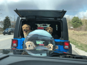 """Made me smile during a traffic back up""(via): ""Made me smile during a traffic back up""(via)"