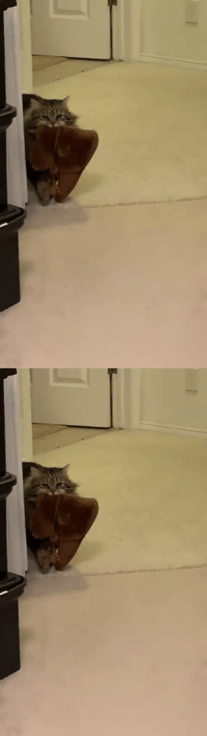"""""""My mom adopted a cat that brings her slippers to her every morning. I didn't believe her until she got it on camera finally""""(Source): """"My mom adopted a cat that brings her slippers to her every morning. I didn't believe her until she got it on camera finally""""(Source)"""