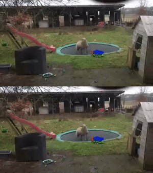 """Sheep discovers how to use a trampoline"" (via): ""Sheep discovers how to use a trampoline"" (via)"