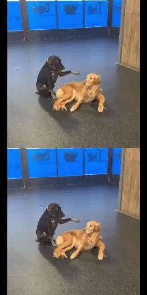 """this is Lucy, she likes to pet the other dogs at daycare"" (via): ""this is Lucy, she likes to pet the other dogs at daycare"" (via)"