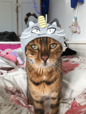 I got this little alolan meowth hat a while ago, but decided today was the day I would see what my cat thought! He didn't seem to mind it at all :): I got this little alolan meowth hat a while ago, but decided today was the day I would see what my cat thought! He didn't seem to mind it at all :)