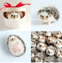 Cutest wool-felt hedgehog. Follow @9gag @9gagmobile 9gag handcraft cute kawaii winter (credit: yucococafe): でnsa,sta  跟 Cutest wool-felt hedgehog. Follow @9gag @9gagmobile 9gag handcraft cute kawaii winter (credit: yucococafe)