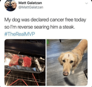 awesomacious:  Long live friend!: も、Matt Galatzan  @MattGalatzan  My dog was declared cancer free today  so l'm reverse searing him a steak.  #TheReal MVP awesomacious:  Long live friend!