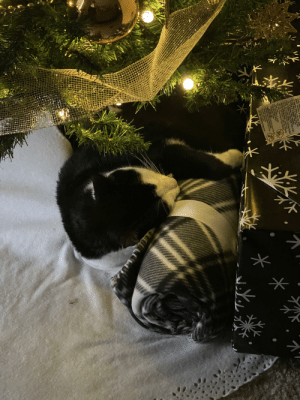 My sweet boy snuggled up under the tree: イ不  Bronch Carerings  Mak  Cord Set  Can  Win Insuiation,  Yep Children g Pets Awdy From Cord  Cut of Dam  Outiels  De No  One Etenston Cord Into Anuther  OID OVERHEATING, Uncoi Cord  and Do No Coist it Wih Any Materl  Do Not Drive Orag or Plece Ofects  ver Com  on Cord  Aas Ungh  Replacing Fuias  URmme Fepm Ou  Avays Store Cord INDOORS  inglug when Not Ube  GR  DO NOT REMOVE THIS TAG  *: My sweet boy snuggled up under the tree